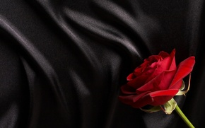 Picture red, black, rose, silk, satin