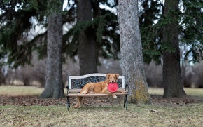 Picture Park, dog, bench