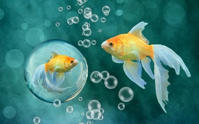 Picture fish, fish, bubbles, background, gold