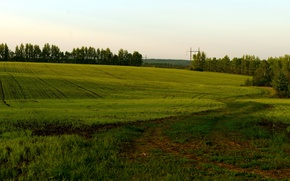 Picture field, summer, nature