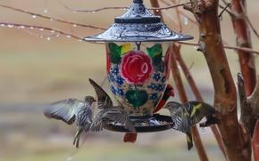 Wallpaper birds, branches, feeder