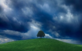 Wallpaper tree, hill, the sky, greens