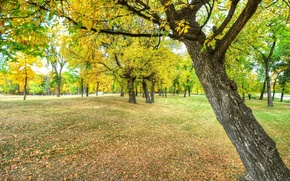 Picture autumn, leaves, bench, Park, tree