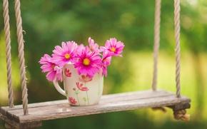 Picture greens, flowers, swing, Cup, kosmeya