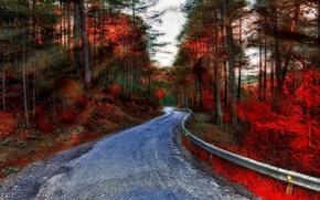 Picture road, autumn, forest, rays, trees
