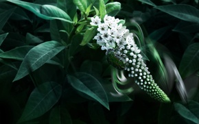 Wallpaper flowers, beetle, leaves