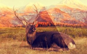 Picture animals, nature, Triangle
