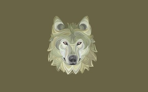 Picture face, wolf, dog, minimalism, head, wolf