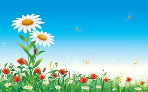 Picture summer, the sky, flowers, insects, nature, chamomile, vector