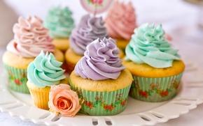 Picture rose, sweets, cream, dessert, cakes, dish, cupcakes