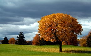 Wallpaper tree, falling leaves, the sky, autumn, clouds, fall colors