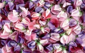 Picture macro, flowers, colors, texture, saver