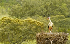 Picture bird, socket, stork, Chicks