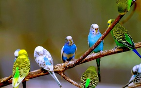 Picture wallpaper, bird, cute