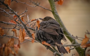 Picture autumn, leaves, branches, tree, bird, dry, nagorlunda