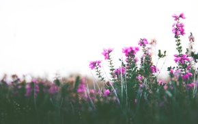 Picture the sky, flowers, stems, bokeh