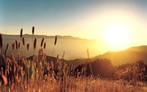 Wallpaper hills, Sunset, grass
