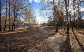 Picture autumn, trees, landscape, nature, river, shore, shadows