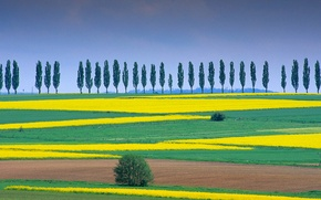 Picture trees, nature, field, Germany, Lower Saxony, Eichsfeld, Duderstadt