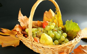 Picture leaves, basket, grapes, pear