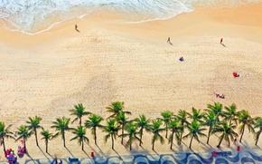 Picture palm trees, shore, Brazil, Rio de Janeiro, Copacabana beach