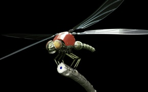 Picture robot, dragonfly, dragonfly