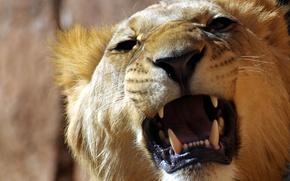 Picture teeth, Leo, mouth, roar