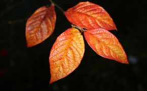 Picture stem, leaves, veins
