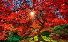 Picture the sky, leaves, the sun, branches, tree, Park