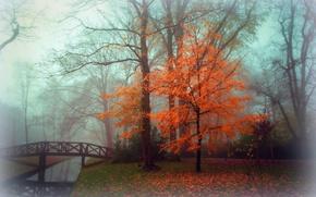 Picture autumn, landscape, fog, Park
