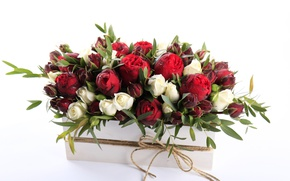 Picture drops, flowers, roses, red, Roses, drops