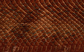 Picture texture, leather, animal texture, background desktop, the scales of a snake