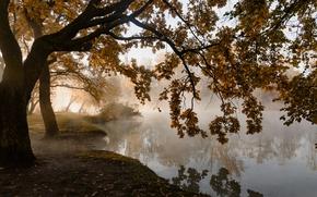 Picture autumn, trees, fog, pond