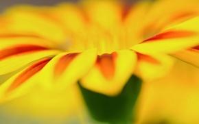 Picture flower, macro, flowers, yellow, background, widescreen, Wallpaper, petal, wallpaper, flower, widescreen, background, macro, full screen, …