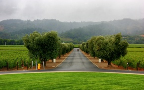 Picture road, machine, trees, fog, lawn, alley, landing