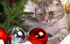 Picture balls, tree, Cat