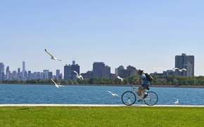 Wallpaper lawn, track, grass, the sky, walk, trees, home, Chicago, Sunny, seagulls, river, promenade, male, USA, ...