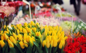 Picture flowers, tulips, flower shop
