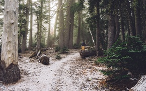 Picture forest, hiker, hiking, trees. path