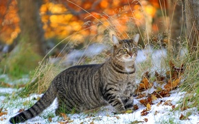 Picture cat, grass, leaves, snow