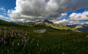 Wallpaper mountains, France, Colmars, meadow, Lupin, clouds, grass, stones