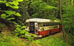 Wallpaper greens, Old bus, forest