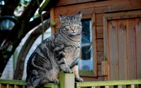 Picture cat, the fence, Koshak, cat