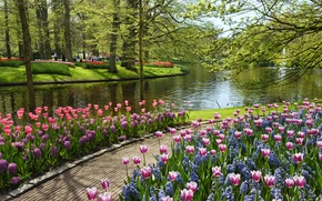 Wallpaper summer, water, flowers, pond, tulips, Park, Netherlands, Netherlands, Keukenhof, Garden of Europe
