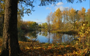 Picture autumn, forest, trees, pond, foliage, forest, Nature, trees, autumn, leaves, pond, fall