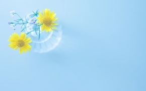 Picture flowers, yellow, background, blue, widescreen, Wallpaper, vase, wallpaper, flowers, widescreen, flowers, background, full screen, HD ...