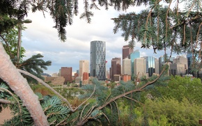 Picture clouds, trees, landscape, branches, home, Alberta, Canada, needles, Calgary