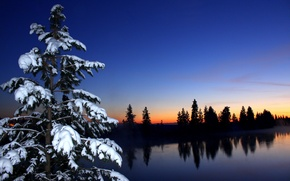 Picture winter, forest, the sky, snow, sunset, river, spruce