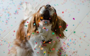 Picture look, each, dog, confetti