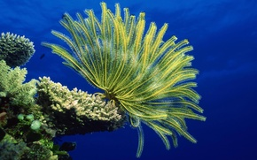 Picture underwater, sea, ocean, life, marine, reef, coral, anemones, marine life